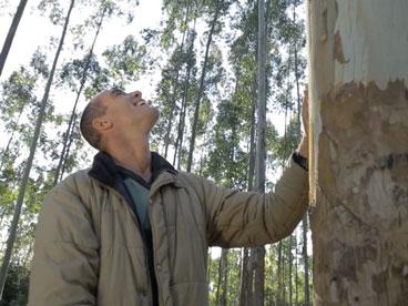 Homem na floresta feliz tocando uma árvore - representando a empresa Greenval Reflorestamento